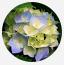 mebane patient testimonial image from google