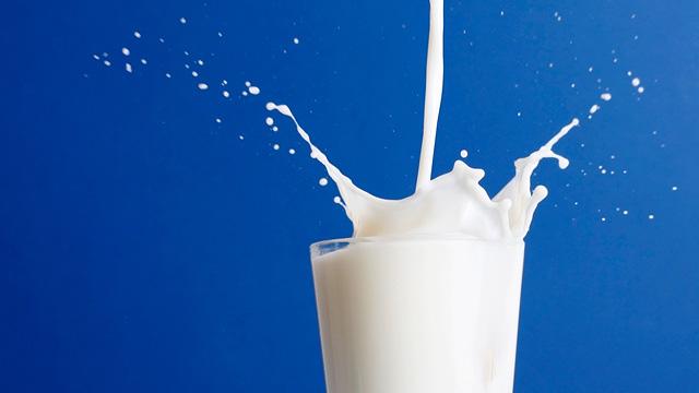 glass of milk splashing with cobalt blue background